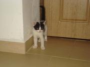 Отдам в добрые руки очаровательного котенка - мальчик